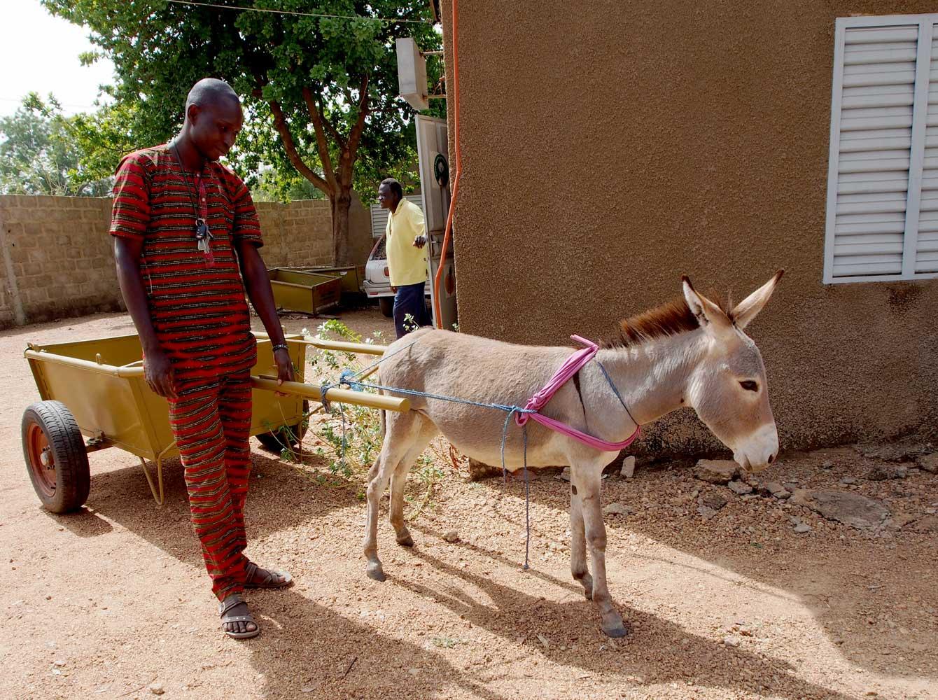 Sponsorenlauf für Esel