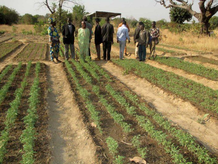 Bürgerkomitee rettet Gemüsegarten